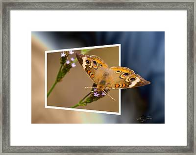 Butterfly Stepping Out Framed Print by Barry Jones