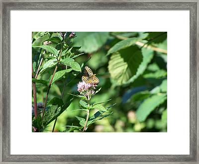 Butterfly Framed Print by Steve Huang