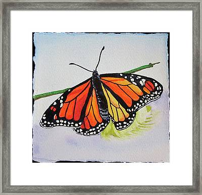 Butterfly Framed Print by Teresa Beyer