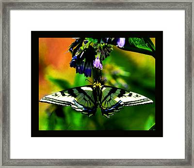 Framed Print featuring the photograph Butterfly Upside Down On Comfrey Flowers by Susanne Still