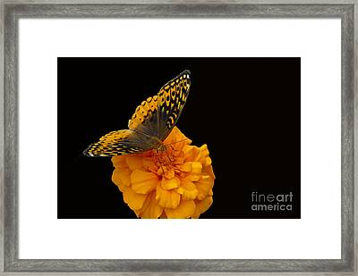 Framed Print featuring the photograph Butterfly Visitor by Cindy Manero