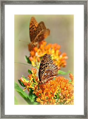 Butterfly Weed 2 Framed Print by Marty Koch