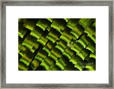 Butterfly Wing Scales Framed Print by Raul Gonzalez Perez