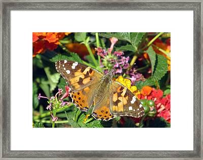 Buttery Fly Framed Print