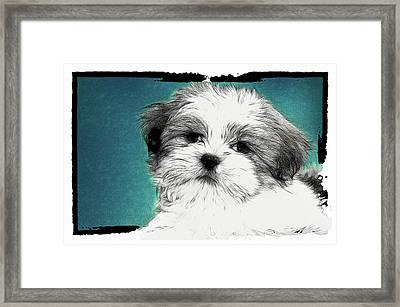 Button Nose Framed Print by Tilly Williams