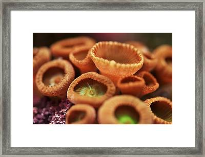 Framed Print featuring the photograph Button Polyp by Puzzles Shum