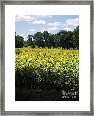 Buttonwood Farm Framed Print