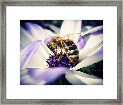 Buzz Wee Bees Framed Print by Lessie Heape
