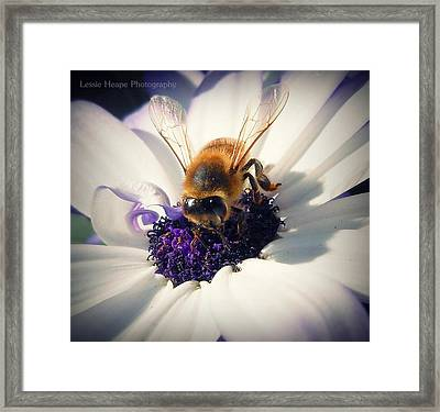 Buzz Wee Bees Lll Framed Print by Lessie Heape