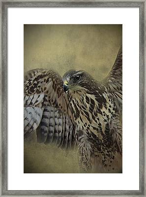 Framed Print featuring the photograph Buzzard Preparing To Fly by Ethiriel  Photography