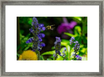 Buzzing Around Framed Print