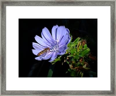 Buzzy In Blue Framed Print by Alison Richardson-Douglas