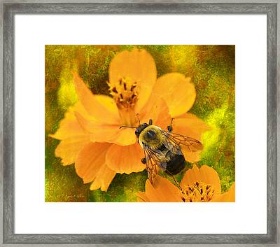 Buzzy The Honey Bee Framed Print by J Larry Walker