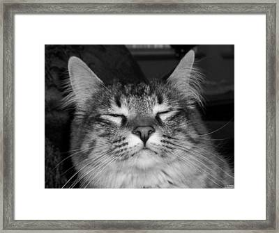 Bw Jeff Framed Print by Paula Greenlee