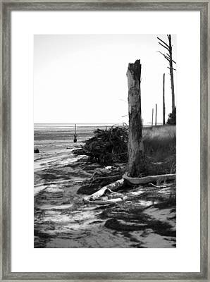 Bwhurricane Damage Framed Print by Judy Hall-Folde