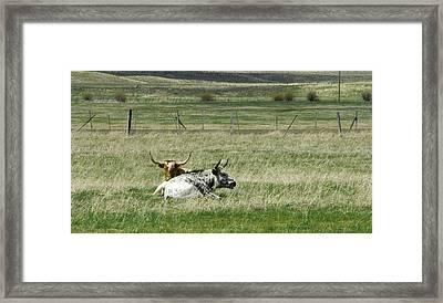 By The Horns Framed Print by Sara Stevenson