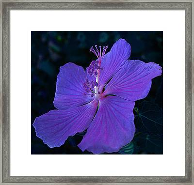 Framed Print featuring the photograph By Vicki's Door by Louis Nugent