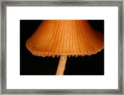 C Ribet Fungiart Brown Cap Framed Print by C Ribet