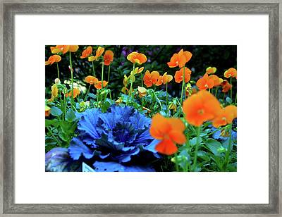 Cabbage And Viola's Framed Print by Laura  Grisham