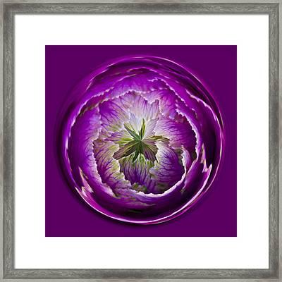 Cabbage Orb Framed Print