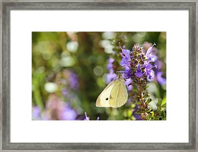 Cabbage White Butterfly Framed Print by Heidi Smith