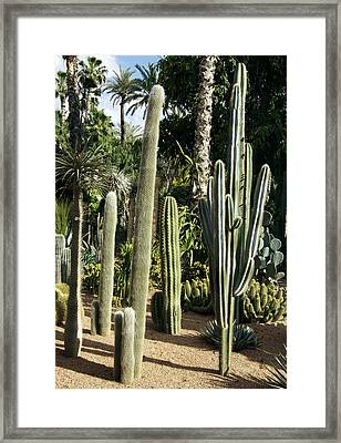 Cacti Garden Framed Print by Johnny Greig