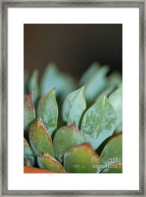 Cactus 2 Framed Print by Melissa Haley