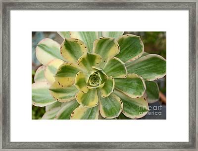 Cactus 63 Framed Print