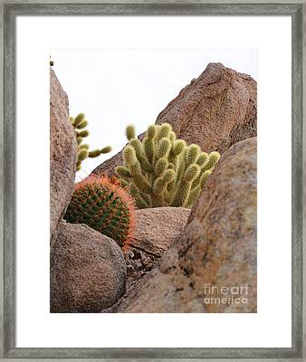 Cactus Among The Rocks Framed Print by Donna Greene