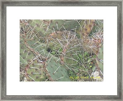 Cactus Framed Print by Anna Stearman