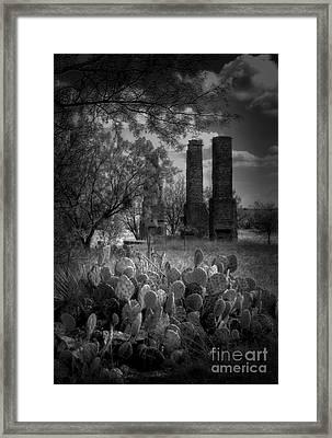 Cactus At Fort Phantom Hill Framed Print