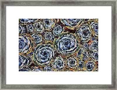 Cactus Blues Framed Print by Yvonne Scott