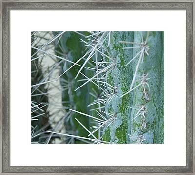 Cactus Close Framed Print by Dietrich Sauer