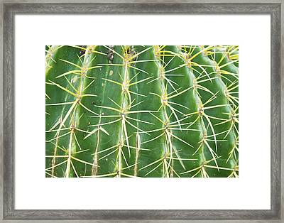 Cactus Close Trouble Framed Print by Dietrich Sauer