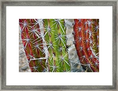 Cactus Colors Framed Print