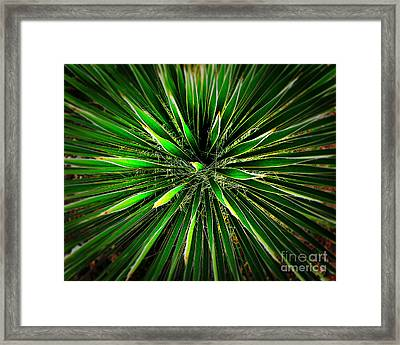 Cactus Explosion Framed Print