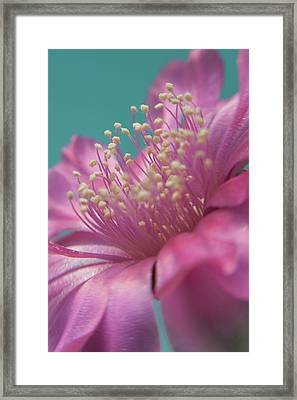 Cactus Flower Framed Print by Images by Patti-Jo