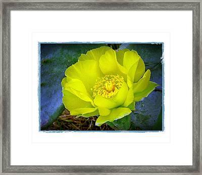 Cactus Flower Framed Print by Judi Bagwell