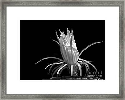 Cactus Flower Framed Print by Sabrina L Ryan