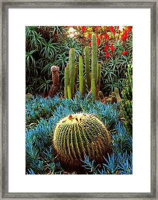 Cactus Gardens Framed Print by Timothy Bulone