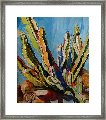 Cactus In The Sun Framed Print by Suzanne Willis