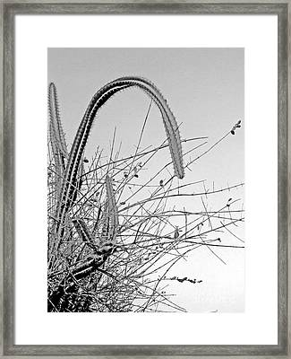 Cactus Framed Print by Isabelle Mbore