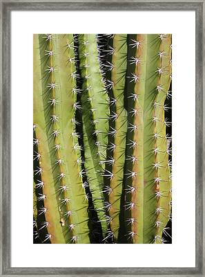 Cactus Framed Print by Jodie Coston
