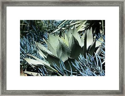 Cactus Framed Print by Marjorie Imbeau
