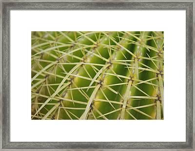 Cactus Framed Print by Oscar Martín