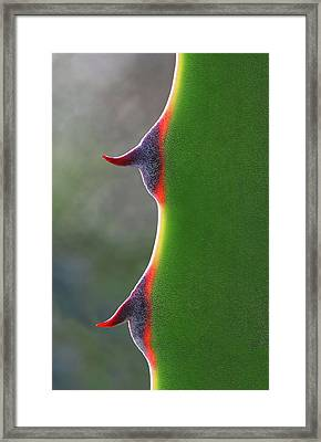 Cactus Framed Print by Patricia Fenn Gallery
