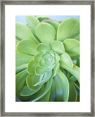Cactus Framed Print by Patricia Granlund