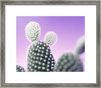 Cactus Plant Spines Framed Print by Lawrence Lawry