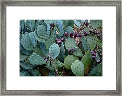 Cactus Plants Framed Print by Maria Urso