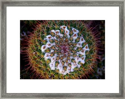 Cactus Radiance Framed Print